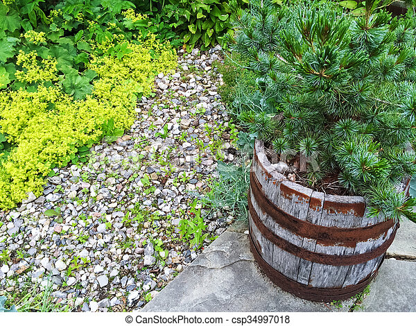 Little Pine Tree Growing In A Wooden Pot   Csp34997018