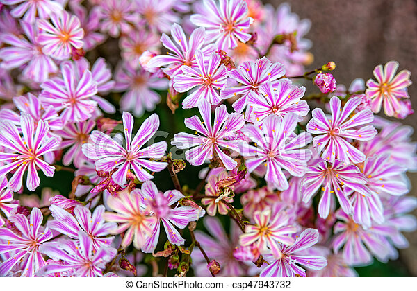 Some little pink flowers at a flower bush little pink flowers at a flower bush csp47943732 mightylinksfo