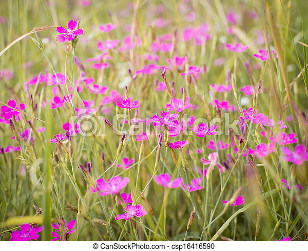 Little pink flowers in green grass - csp16416590