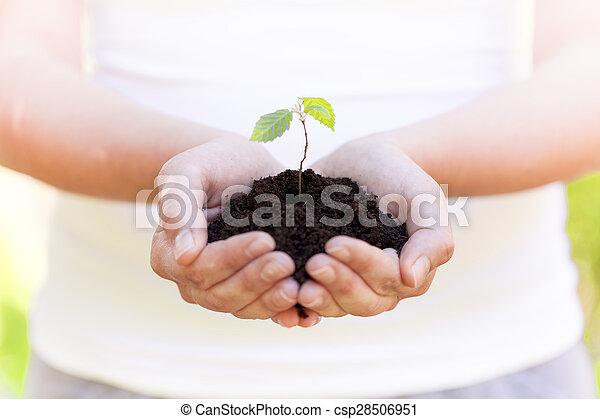little plant in hands - csp28506951