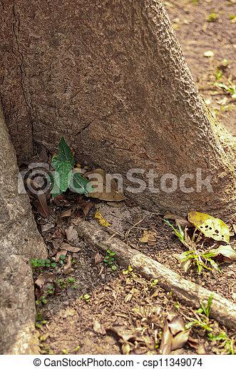 Little Plant - csp11349074