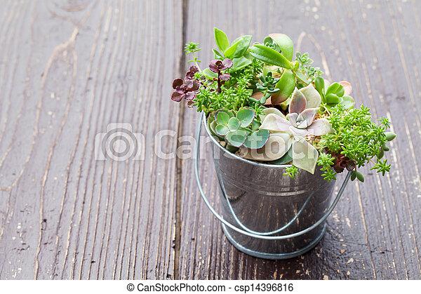 Little plant - csp14396816