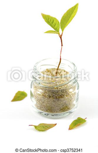 Little plant - csp3752341