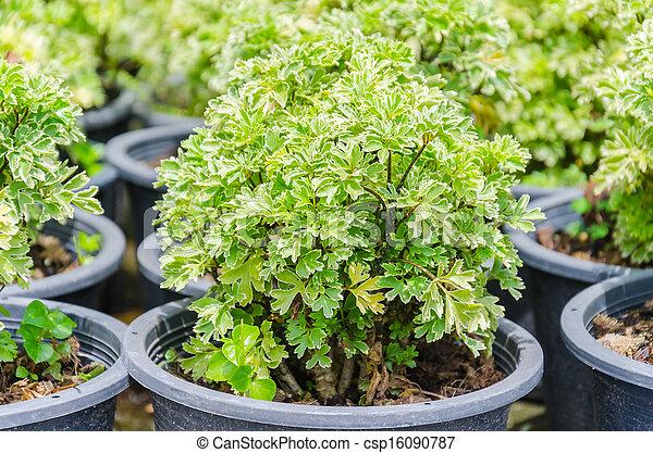 Little plant - csp16090787