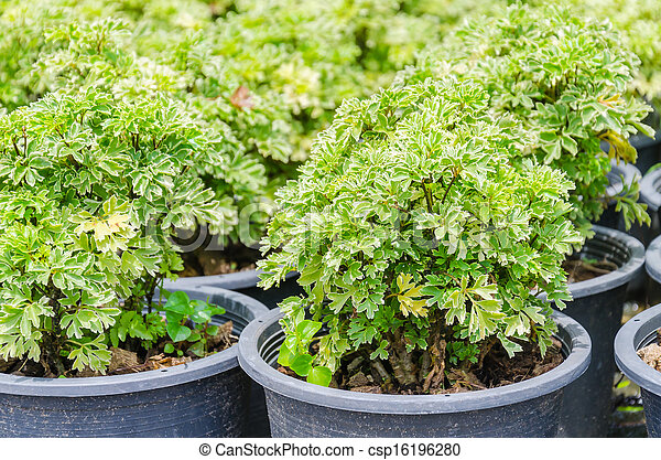 Little plant - csp16196280