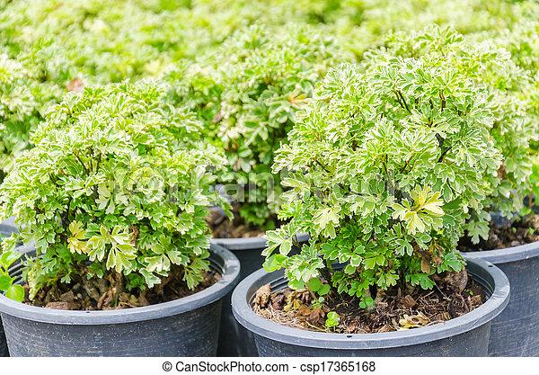 Little plant - csp17365168