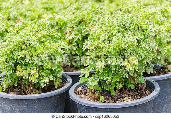 Little plant - csp16265652