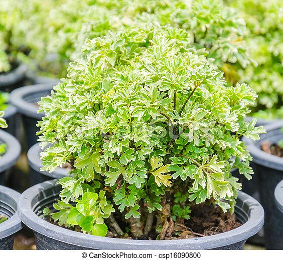 Little plant - csp16090800