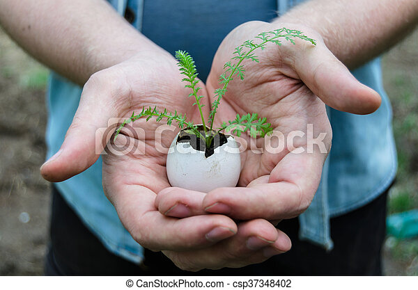 Little Plant - csp37348402