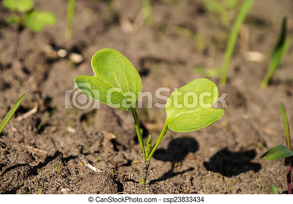 little plant - csp23833434