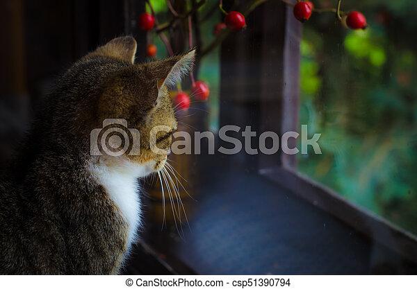 little sad cat - csp51390794