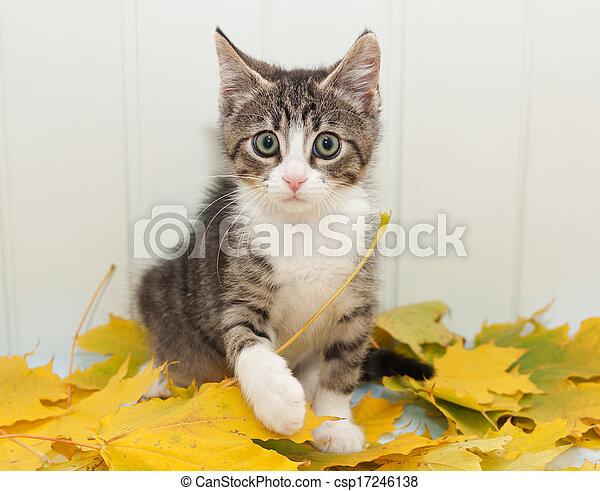 Little scared tabby kitten - csp17246138