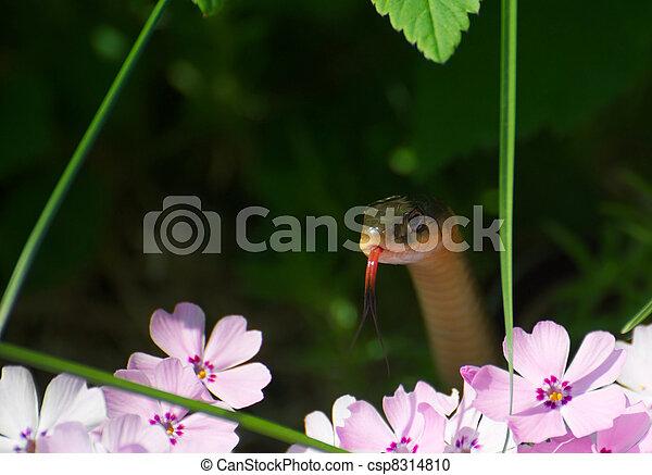 Little snake peeking out. - csp8314810