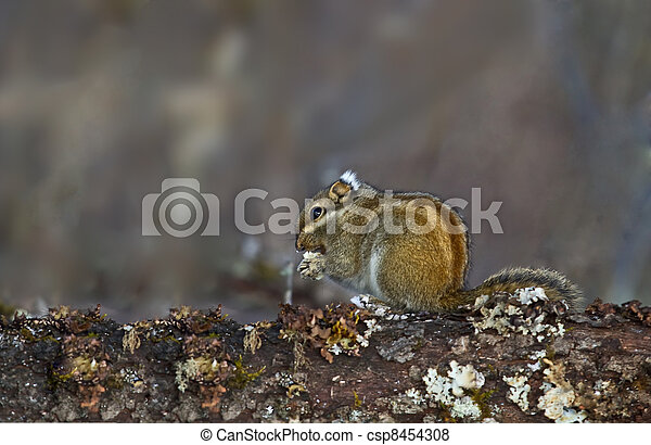 Little squirrel eating peanuts on tree branches - csp8454308