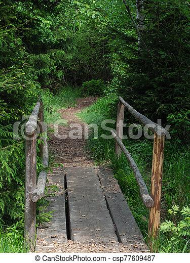 Little wooden bridge over creek in forest - csp77609487