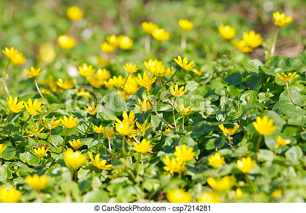 Little yellow flowers little yellow flowers csp7214281 mightylinksfo