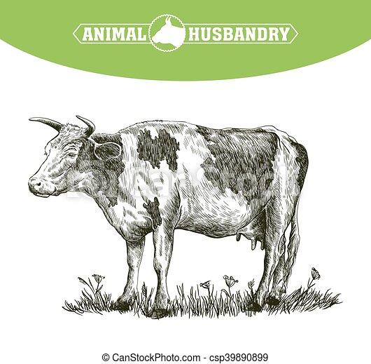livestock., schizzo, mucca, mano., animale, disegnato, cattle., pascolo - csp39890899