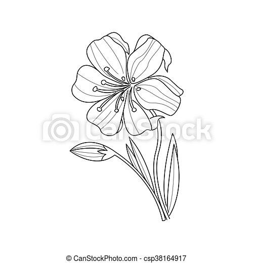 Livre Coloration Fleur Monochrome Souci Dessin Style