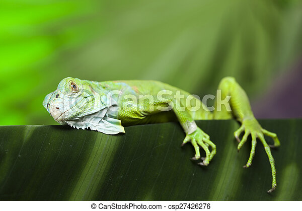 Lizard, bright colorful vivid theme - csp27426276