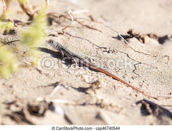 lizard in the nature - csp46740544