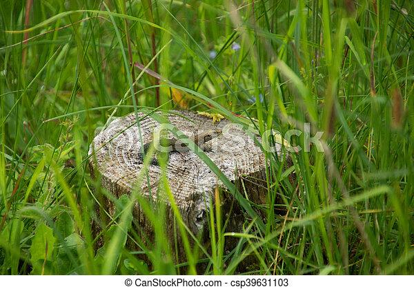 Lizard on a Stump - csp39631103