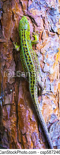 lizard on a tree - csp58724698