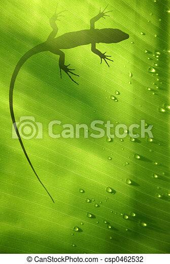 Lizard on Leaf - csp0462532