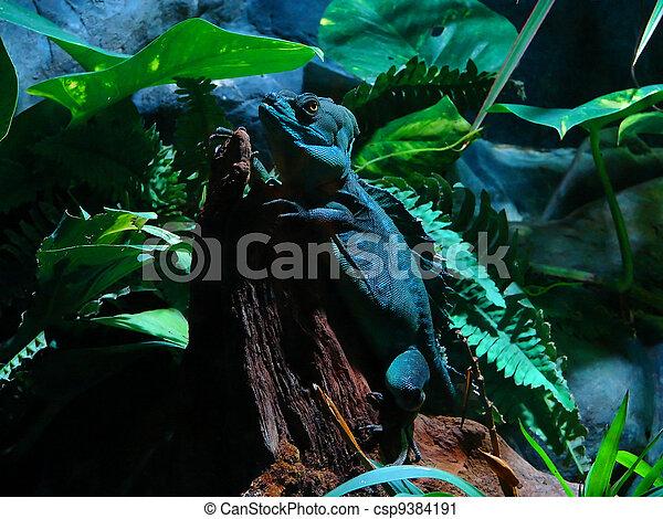 lizard - csp9384191