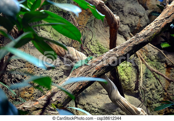 lizard sitting on a tree - csp38612344