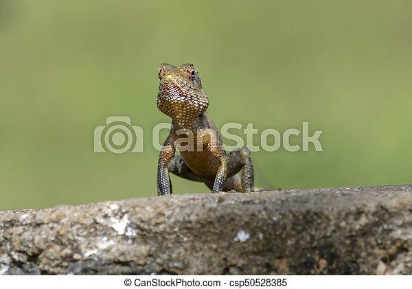 Lizard sitting on a tree stump. - csp50528385
