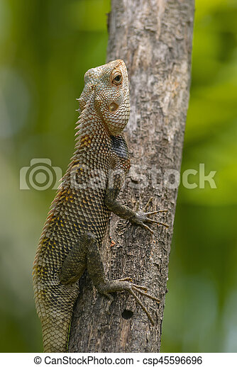 Lizard sitting on a tree stump. - csp45596696