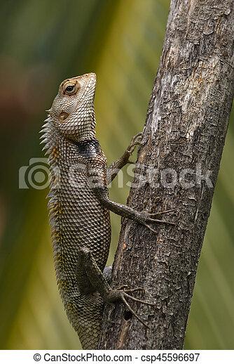 Lizard sitting on a tree stump. - csp45596697