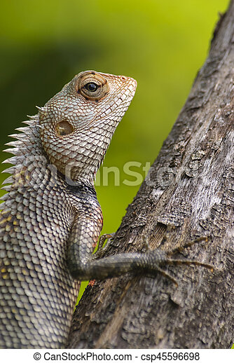 Lizard sitting on a tree stump. - csp45596698
