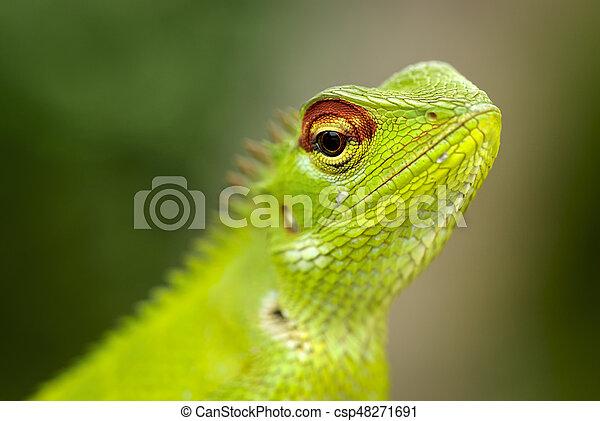 Lizard sitting on a tree stump. - csp48271691