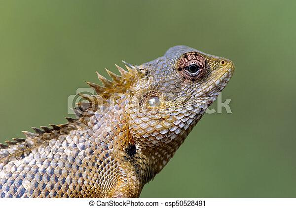 Lizard sitting on a tree stump. - csp50528491