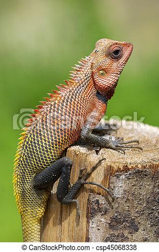 Lizard sitting on a tree stump. - csp45068338