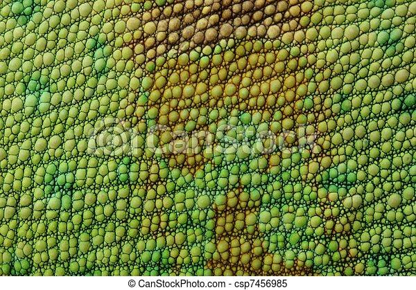 Lizard Skin Stock Image Csp7456985