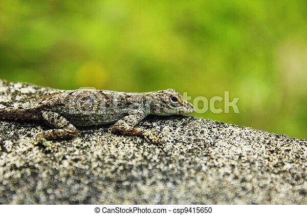 Lizard - csp9415650
