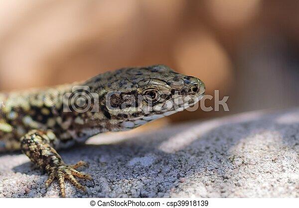lizard - csp39918139