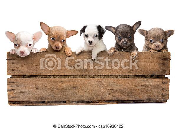 Una caja llena de perros - csp16930422