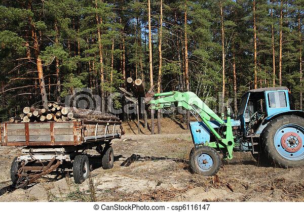 Loading logs of trees in the forest - csp6116147