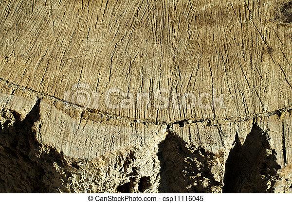 Log background - csp11116045
