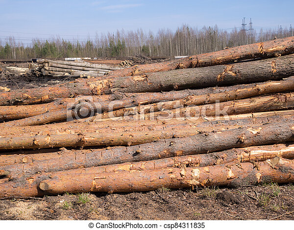 logs on the ground - csp84311835
