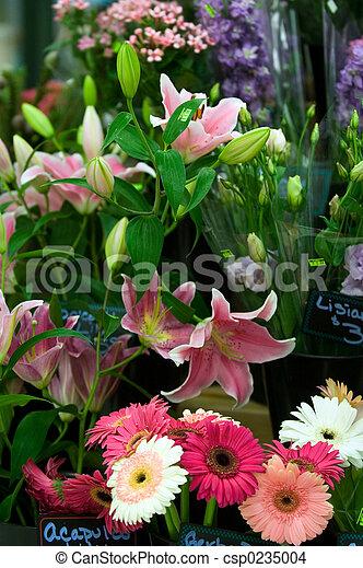 loja, flor - csp0235004