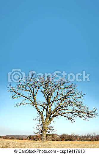 Lone Bare Branched Winter Tree in the Country - csp19417613