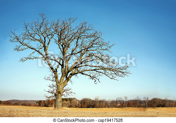 Lone Bare Branched Winter Tree in the Country - csp19417528