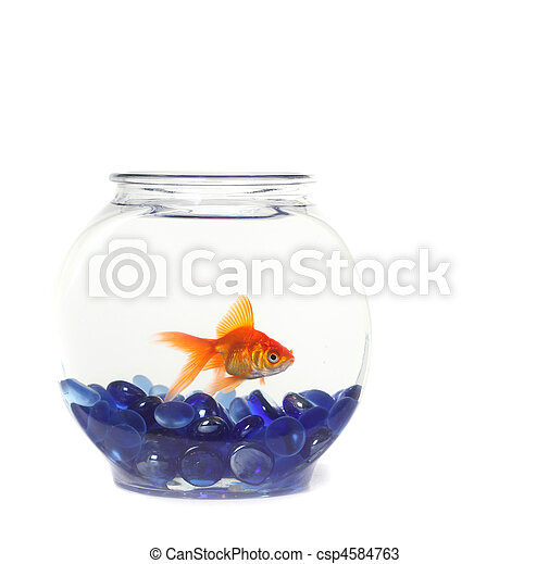 Lone Goldfish in a Fishbowl  - csp4584763