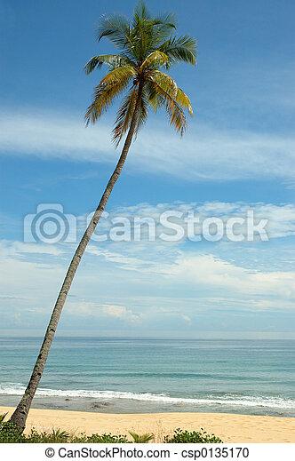 lone tree - csp0135170