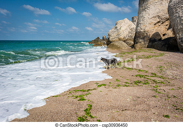Lonely dog next to the Black sea in Turkey - csp30936450