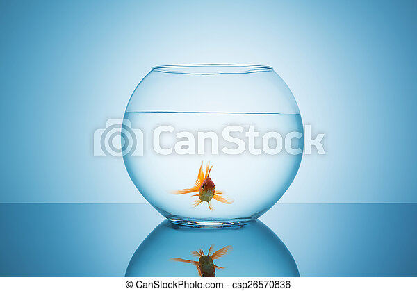 lonely goldfish in a fishbowl - csp26570836